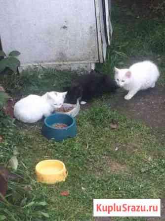 Кошка с котятами Лотошино