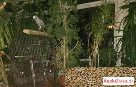 Комнатные растения до 3 метров. Фикусы и другие Фряново