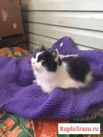 Котята ищут дом Домодедово