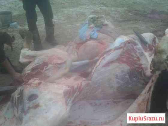 Бычки на мясо доращивание Волоколамск