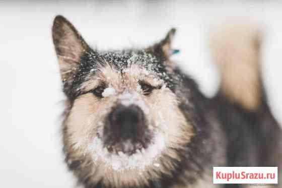 Добрый и веселый пес Борис ищет дом Малаховка