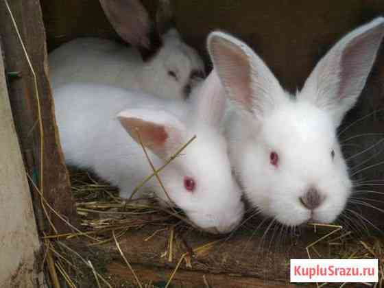 Кролики Дорохово