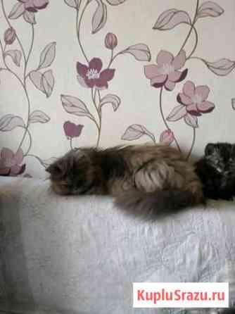 Котейки самцы самки, сами уже едят и приучены к ло Сергиев Посад