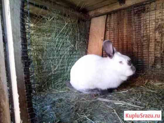Домашние кролики Видное