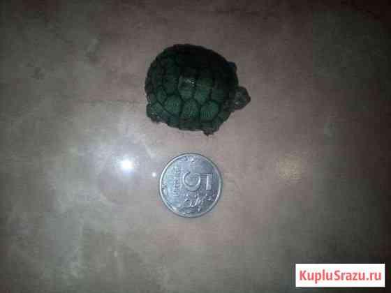 Отдаю красноухаю черепаху вместе с домиком Домодедово