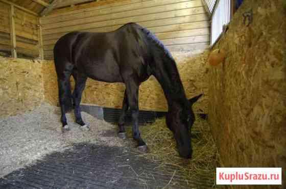 Яблоки лошадям бесплатно Андреевка