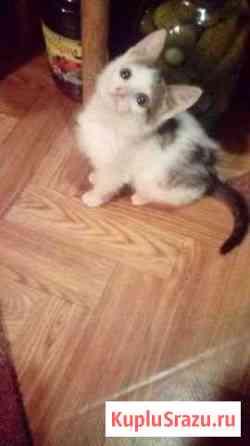 Отдам 2-х месячных котят Скоропусковский