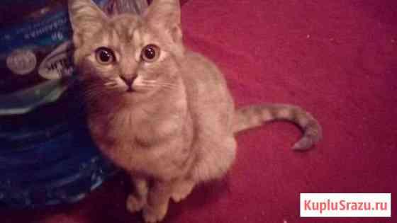 Отдадим 4-х месячных котят новым хозяевам Скоропусковский