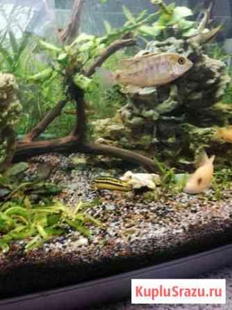 Аквариумные рыбки Кубинка