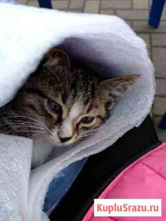 Котёнок ищет дом Сочи