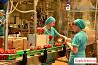 Рабочие на консервный завод