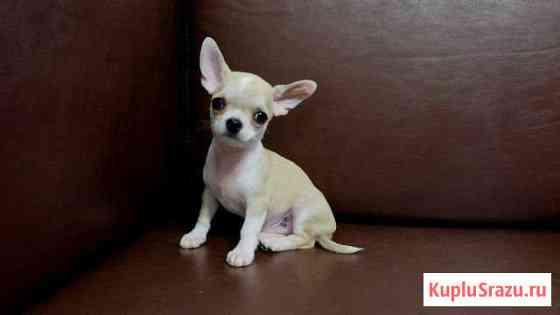 Мальчик мини 3 месяца Чехов