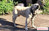Собака для охраны дома в деревне