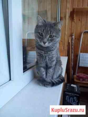 Кот мечтает познакомиться с невестой для вязки Черноголовка