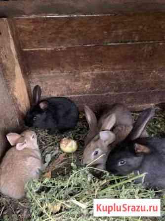 Кролики Домодедово
