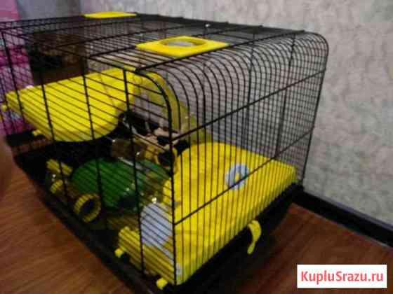 Клетка ш57 г36,5 в43 см Черноголовка