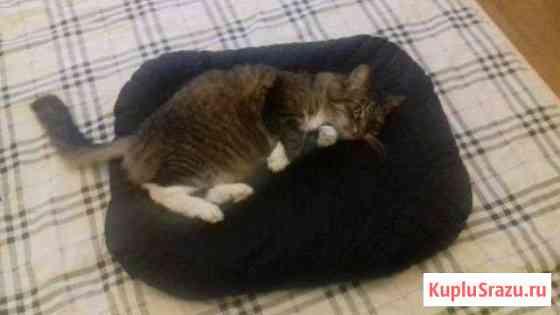 Подушка для кошки Быково