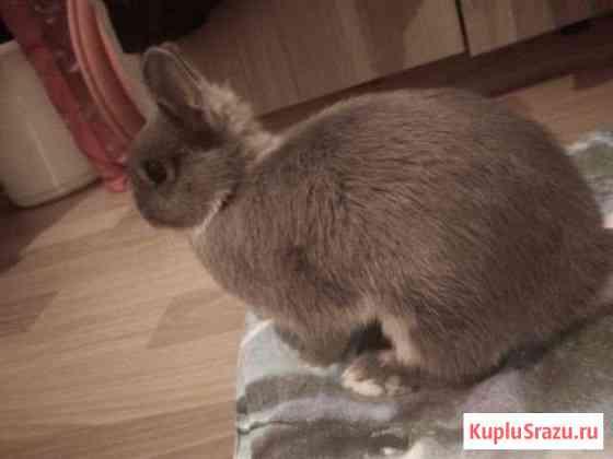 Карликовый нидерландский кролик+клетка и инвентарь Санкт-Петербург