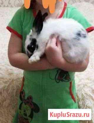 Продам декоративного кролика с клеткой Нижний Новгород