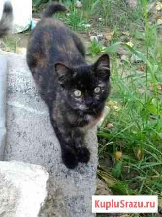 Отдаем котят Щеглово