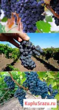Виноград (разные сорта) Анапа