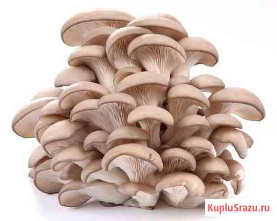 Выращивание грибов Ростов-на-Дону