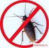 Уничтожение тараканов и клопов,удаление запахов