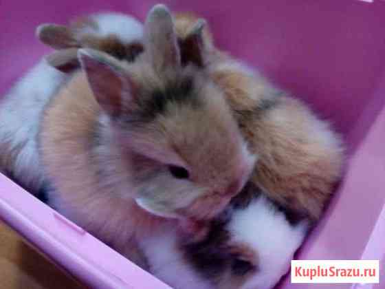 Декоративные кролики малыши Екатеринбург