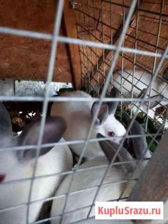 Кролик калифорнийский Челябинск