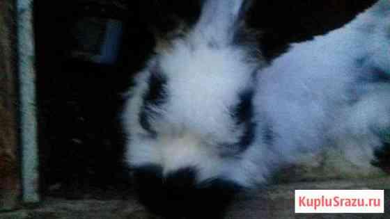 Кролик Нижний Новгород