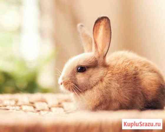 Кролики, утки, куры, индюшки, гуси, козы, яйцо Санкт-Петербург
