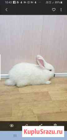 Кролики Краснодар