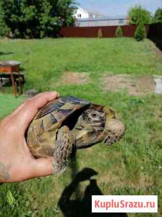 Черепаха пропала Шахты