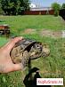 Черепаха пропала
