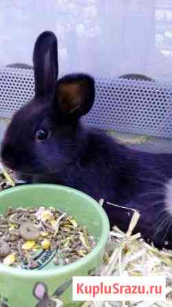 Кролик Санкт-Петербург