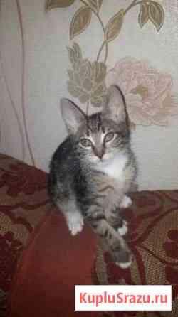 Котята в добрые руки Волоколамск