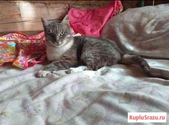 Кошечка Рони в любящие ручки Домодедово