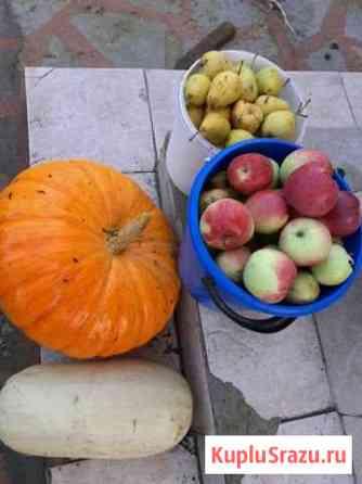 Тыква,кабачки,яблоки,груша Михнево