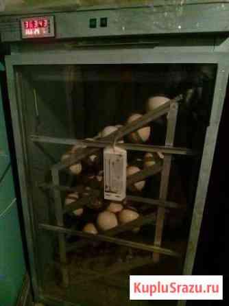 Инкубатор страусиный Яхрома