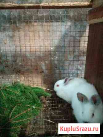 Кролики Санкт-Петербург