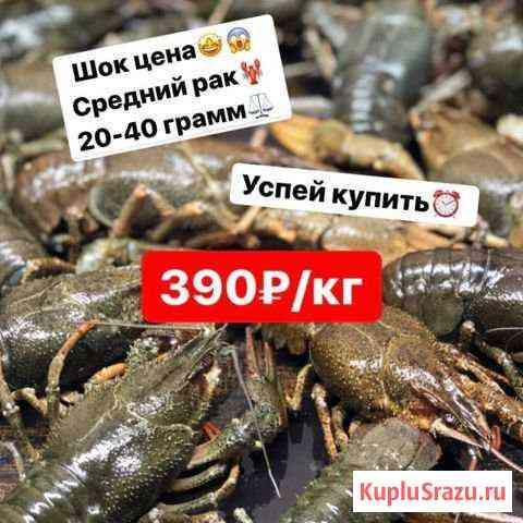 Живые Раки Анапа, Витязево Анапа