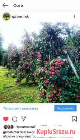 Обрезка плодовых деревьев Москва