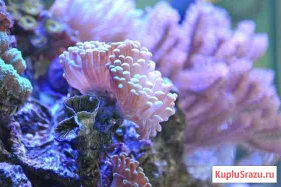 Морские Аквариумы в Сочи Сочи