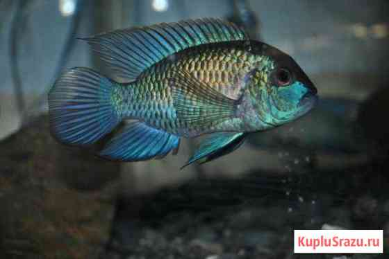 Рыбки для аквариума Сочи