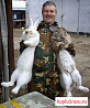 Кролики на племя Ризен