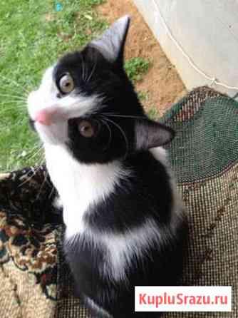 Цветные котятки Софрино