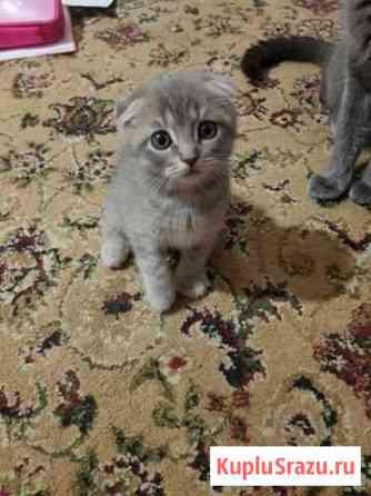 Милые котики Руза