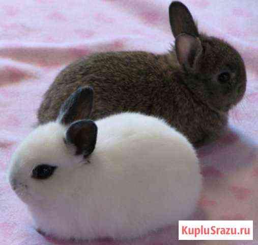 Карликовые декоративные кролики от заводчика Москва