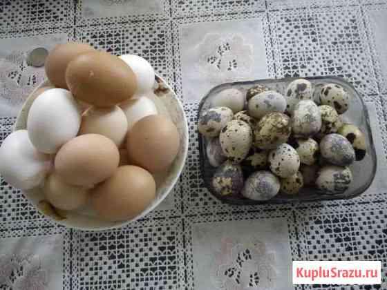Яйцо перепелиное, куриное Протвино