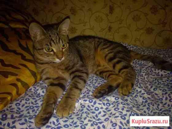 Котенок подросток Большие Вяземы